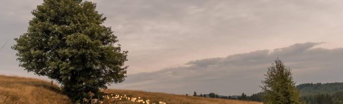 Pomoc s organizací festivalu Land and Art setkání Königsmühle