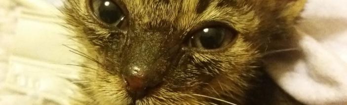 Kočičí útulek Teplické kočky z.s. v nouzi !!!!!!