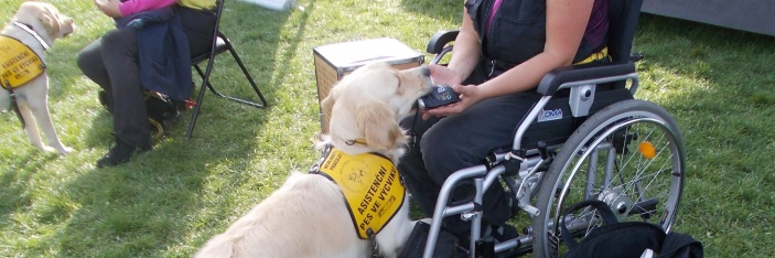 Helppes – ukázky výcviku asistenčních psů