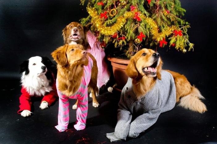 Tip na vánoční dárek, který udělá radost několikrát
